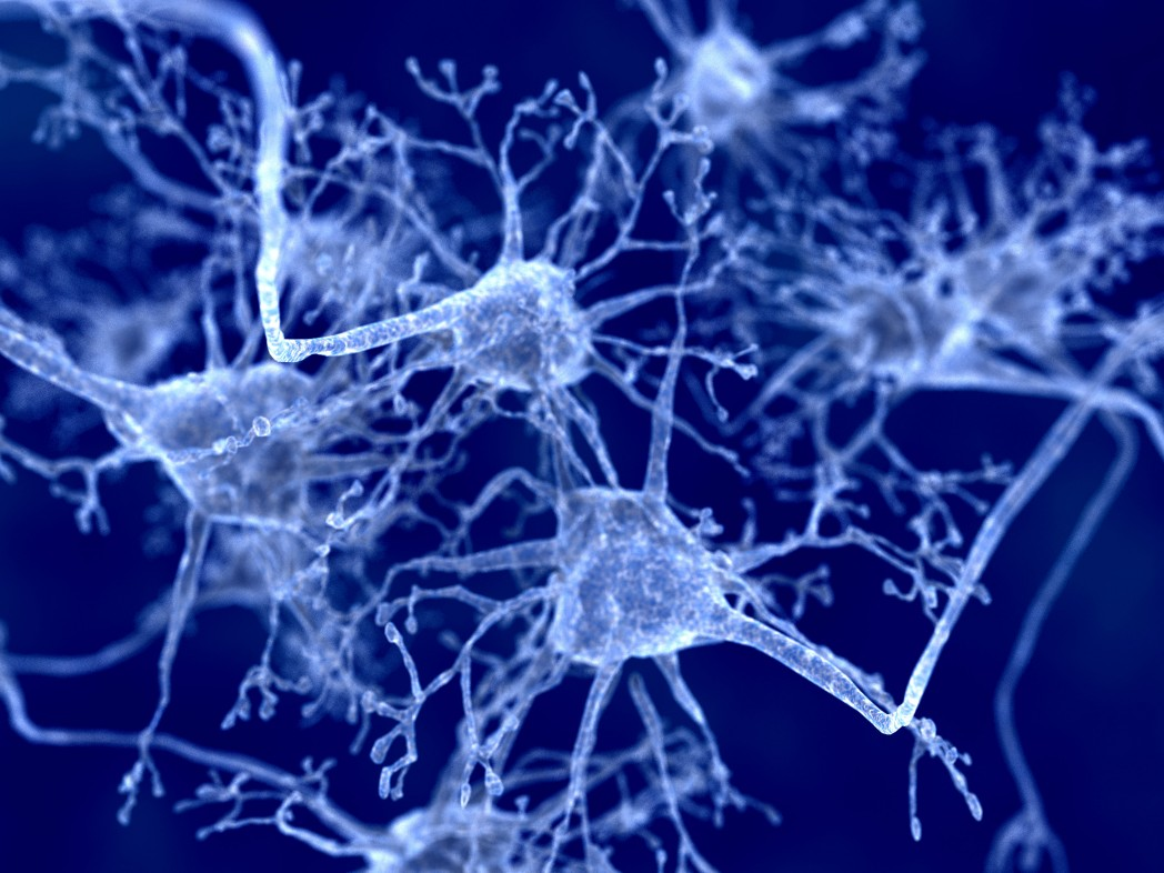 Researchers Discover Immune System Plays a Critical Role in ALS Development