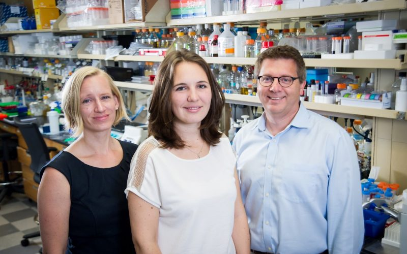 Stress Granules May Be Key to ALS and Related Diseases