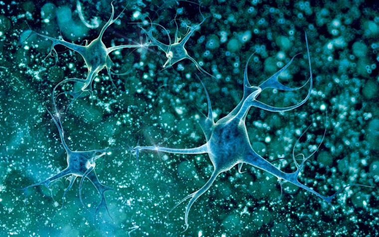 Brain capillaries and ALS
