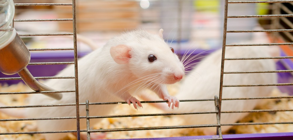 New ALS Mouse Model Reported to Accurately Mimic Disease Pathology