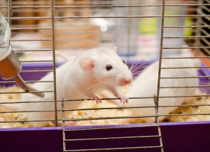 Animal Model ALS Genetics Leading to Personalized Medicine for Humans