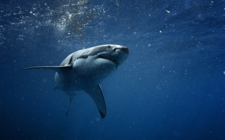 toxins in shark meat linked to ALS