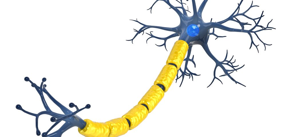How Motor Neurons Form from Stem Cells Seen in Study That May Move ALS Cell Therapy Step Forward