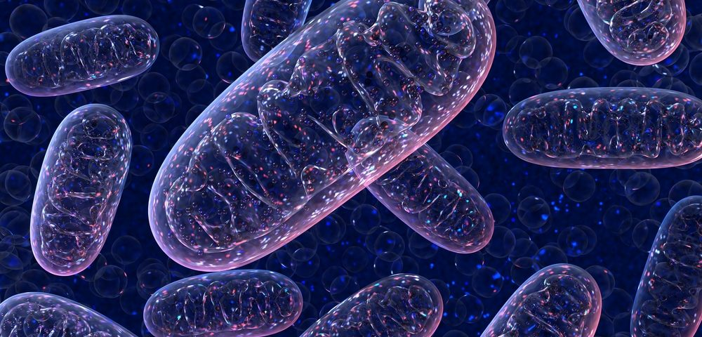 Tool to Test Health of Mitochondria in Neurons May Lead to ALS Therapies, Study Reports