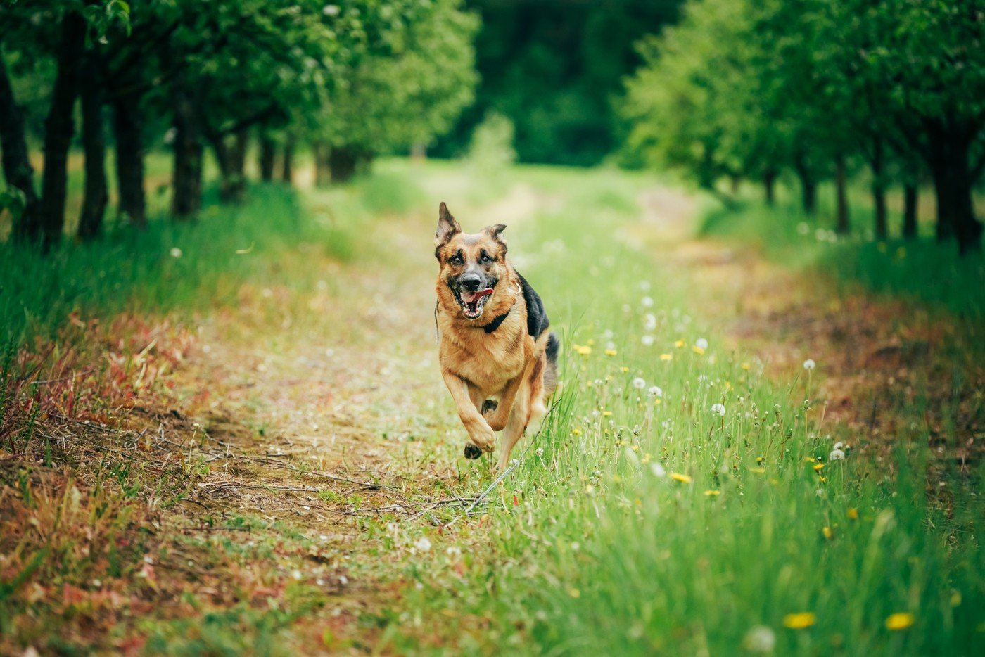 dogs with ALS-like disease
