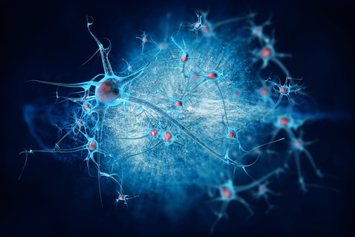 Antibodies Preserve Nerve-Muscle Connections in Mouse Model of ALS, New Study Shows