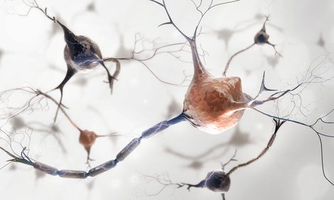 Repair Cells Change in Neurodegenerative Disorders, Promoting Muscle Wasting and Scarring, Study Says