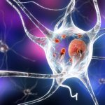 motor neurons and toxicity
