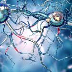 glial cells and synapses