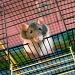 Motor Neuron Damage in ALS mice