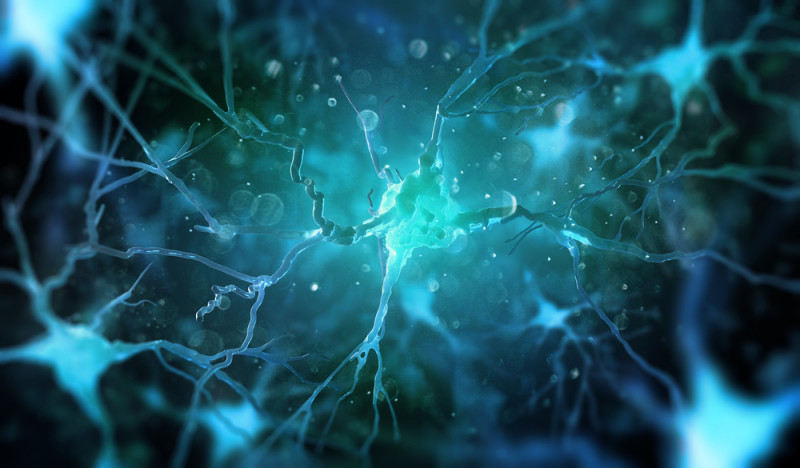 cholesterol problems in ALS | ALS News Today | nerve cells need for cholesterol