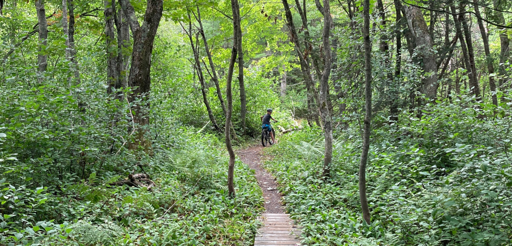 Coping as an ALS caregiver   ALS News Today   A narrow biking trail cuts through lush, green woods. Kristin's son is stopped ahead on his bike.